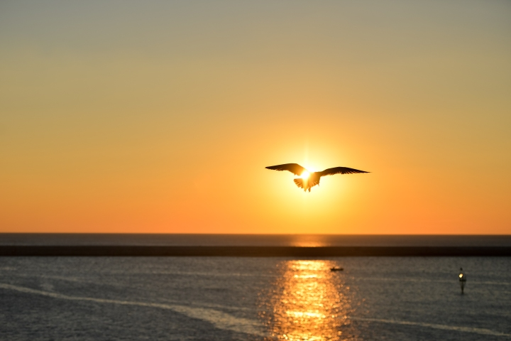 sea-sunset-bird-flying