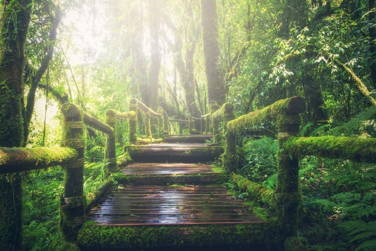 adventure-beautiful-boardwalk-235734